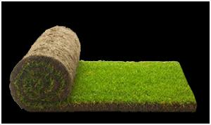 Trava za fudbalske terene